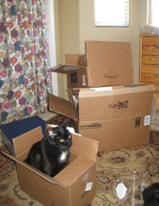 My crafting bane/buddy, Newton is all boxed up and ready to go. No more concrete floor.